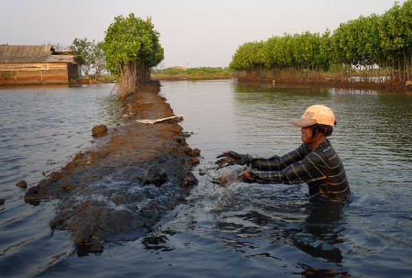 Construction_of_Freshwater_Shrimp_Farm,_Pekalongan