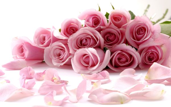 flowers_images_amusable_pink_flowers_bunch_pictures_hd_desktop_widescreen_backgrounds