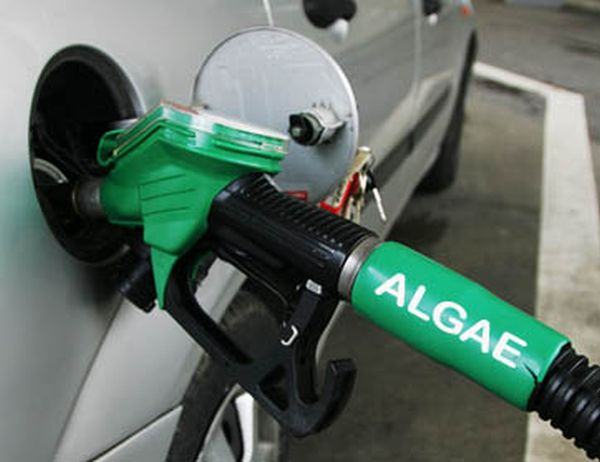 Algae-for-fuel-pic-3