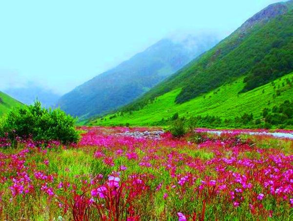 Valley of Flowers7