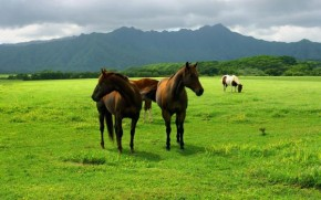 animals-pasture-field-meadow-grass-earth-sky-horses-wallpaper