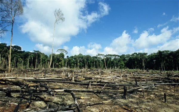 deforestation_2074483b