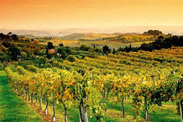Franzia Winery