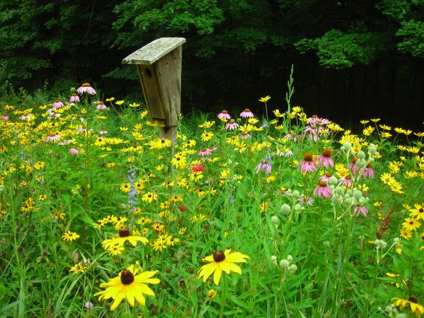 Native plants are more suitable for your climate