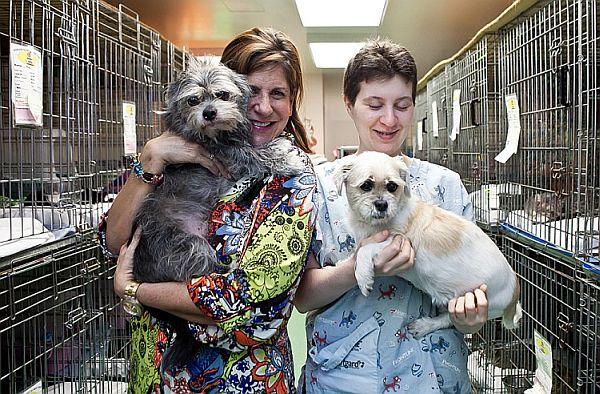 20121009-pet+shelter-IMG_9743-Amal+Chen