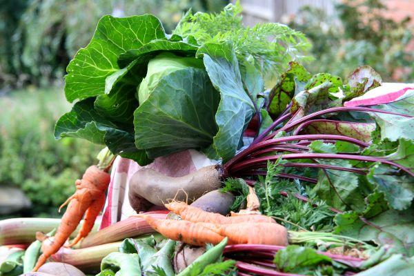 Organic Food Production in La Farge