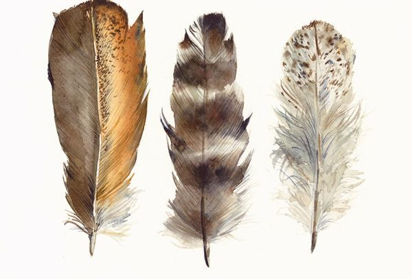 Chicken Feathers