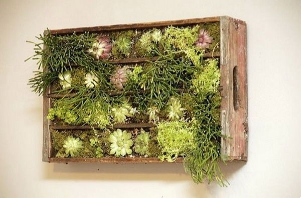 living green wall with old wooden crate