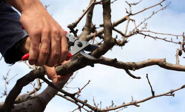 tree wounds treatment