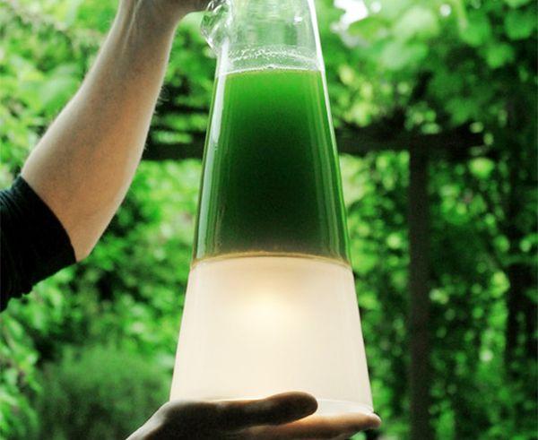 algae The Latro Lamp