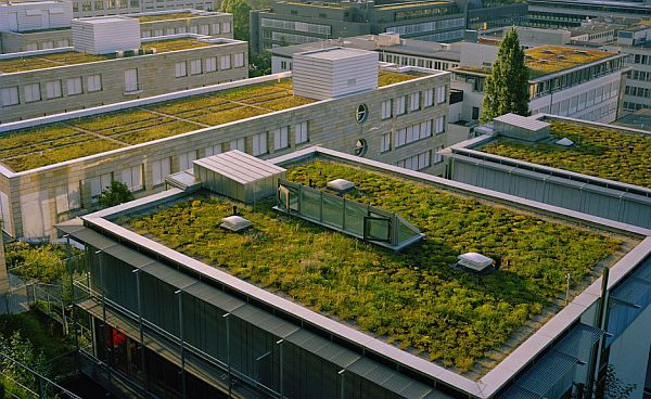 Green roofs 3