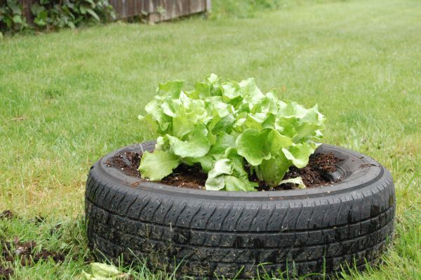 Unusual objects recycled into planters that look grat - Planters made from old tires ...