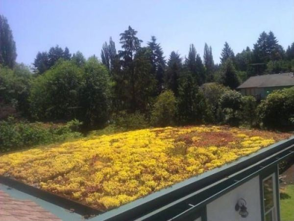 GREEN ROOF (3)