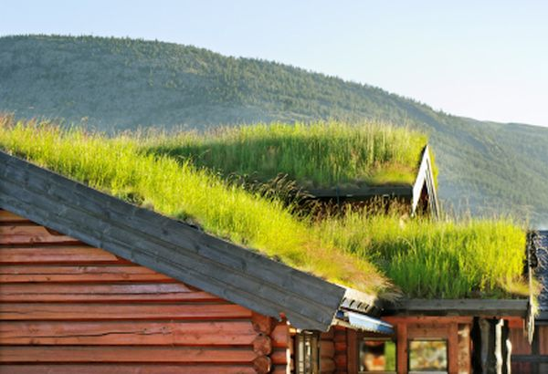 Roofs with grass.