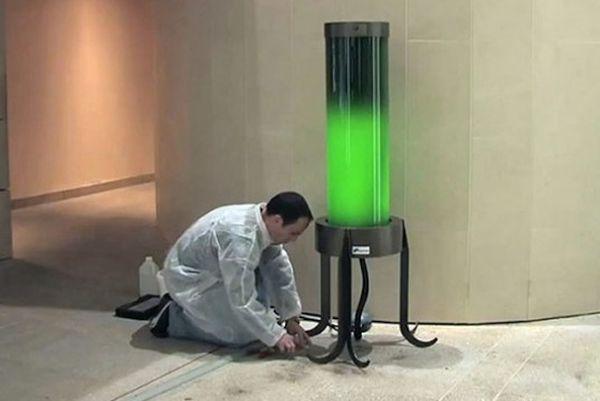 Living Microalgae Lamp
