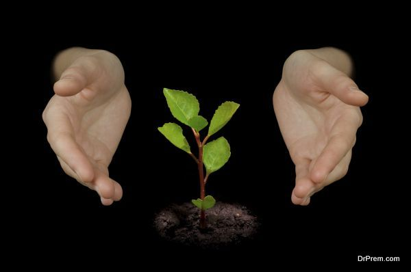 Hands protecting a young growing little tree.