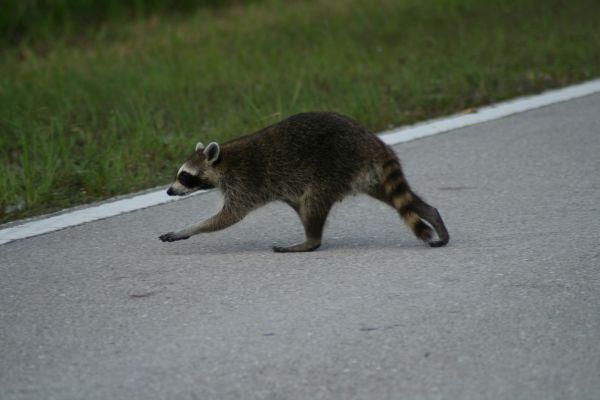 wild-visitor