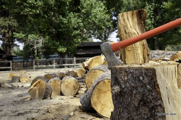 tree-felling-and-removal