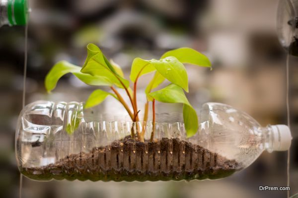 Empty plastic bottle use as a container for growing plant