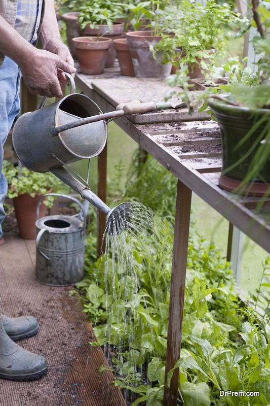Use grey water for watering the plants