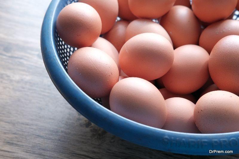 Germ-Free-Method-of-Hatching-Eggs