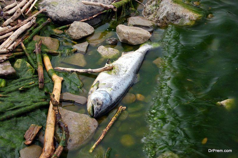 river-polllution