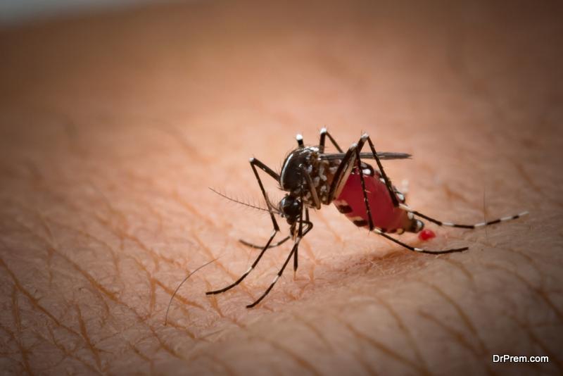 Preventing-Mosquito-Bites