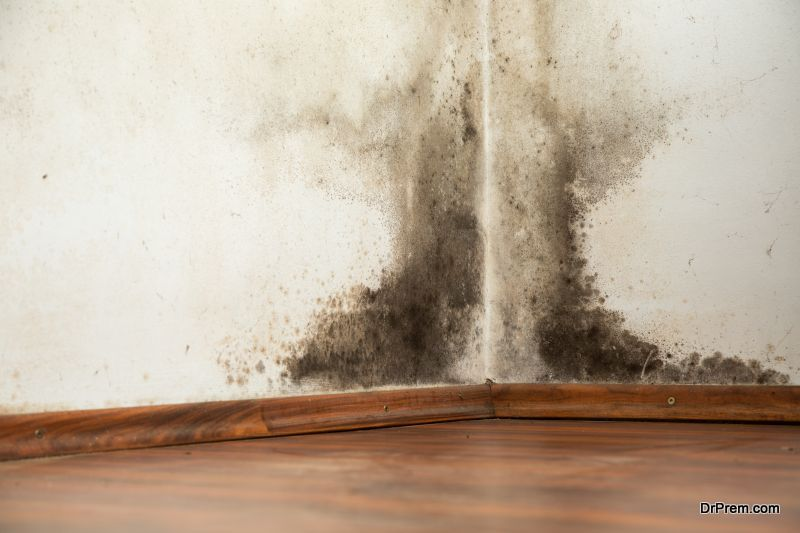 Reduce-Mold-in-Your-Home