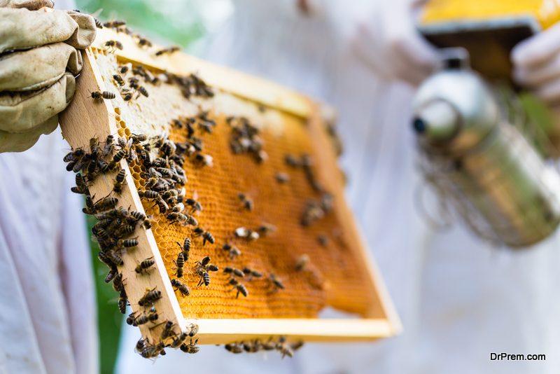 bee-farming