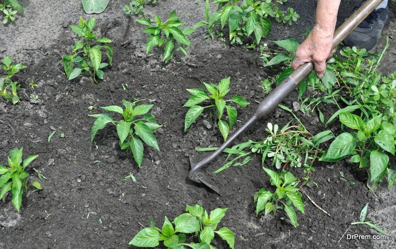 Weeding by hand