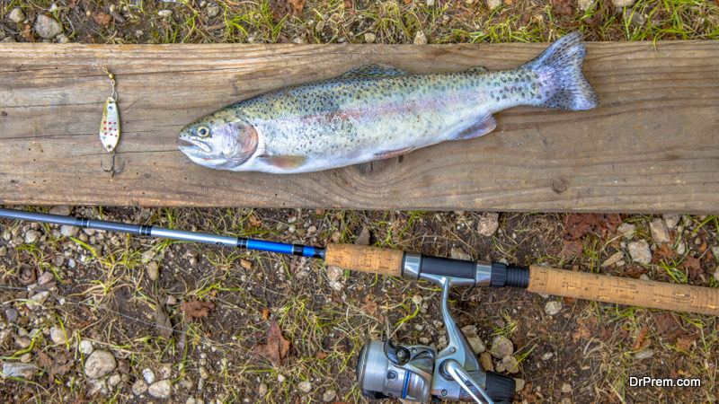Fish-for-Trout-