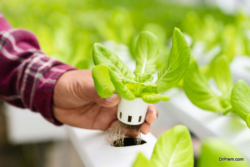 hydroponic planters
