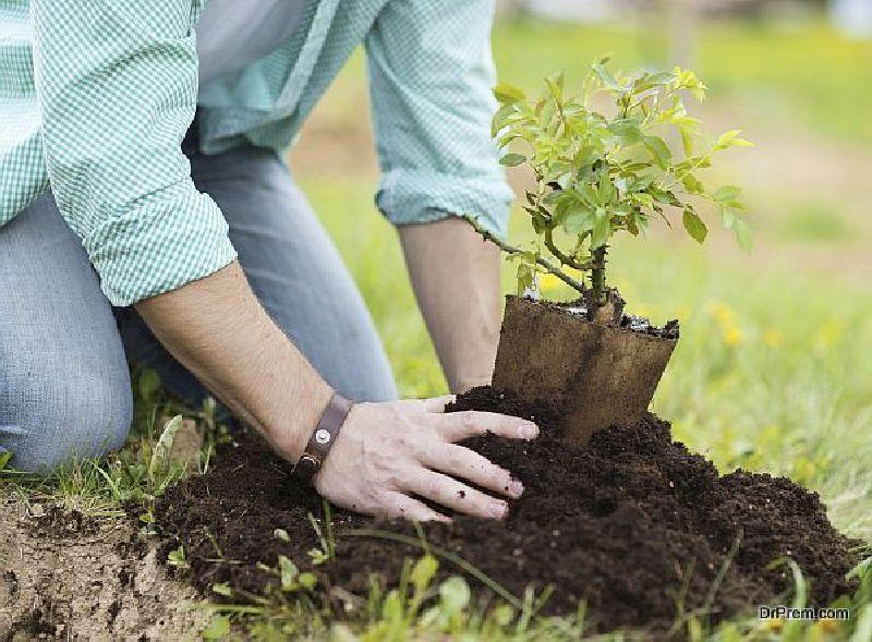 Revamp Landscaping