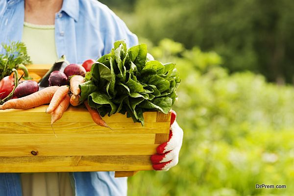 creating your own fruit and vegetable patch