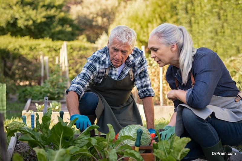 couple Maintaining a Small Kitchen Garden