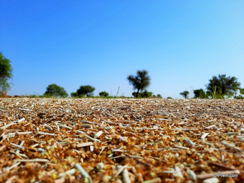 Teysha Technologies Is Transforming Agricultural Waste into Biopolymers