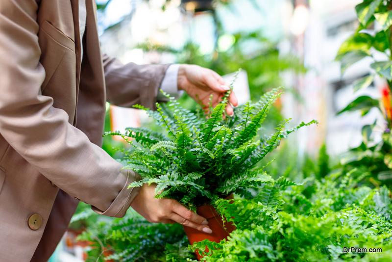 choosing plants for landscape