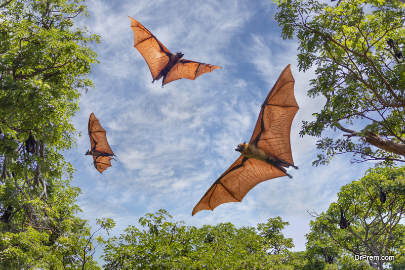 Ecological Importance of Bats