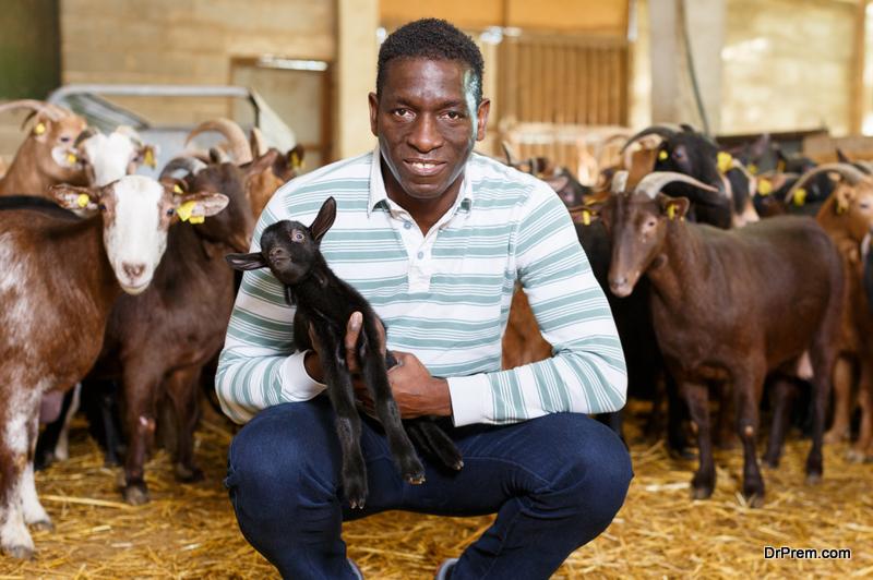Upgrade Your Livestock Business
