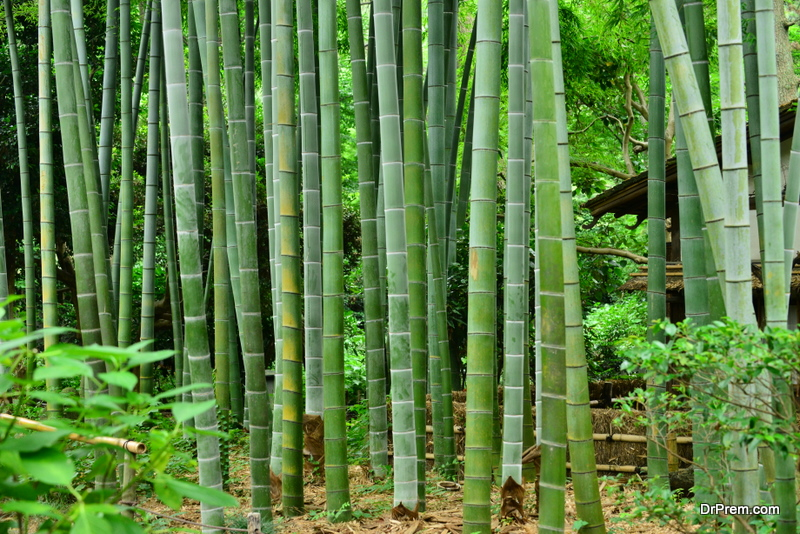 Bamboo is a renewable resource