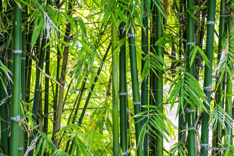 Bamboo-prevents-soil-erosion