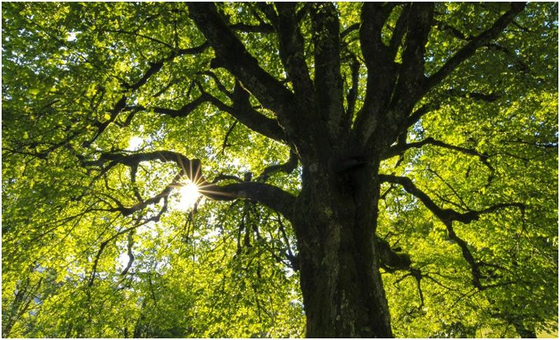 Protect Your Trees Against Late Summer Storms